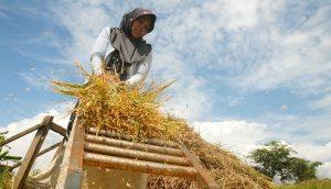 Petani merontokan padi pada panenan di Sukaratu, Kabupaten Tasikmalaya, Jabar, Kamis (7/11)