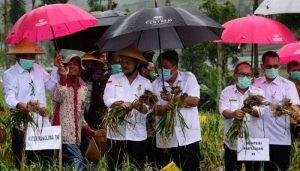 Mentan Panen Bawang Putih di Temanggung, Produk Lokal Lebih Sedap,