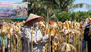 Menteri Pertanian Syahrul Yasin Limpo (SYL) bersama Bupati Bantaeng Ilham Azikin melakukan panen jagung seluas 350 hektar di Desa Kaloling Kecamatan Gantarang Keke,