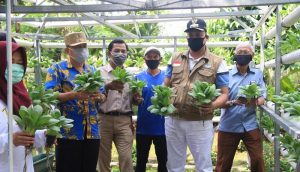 Wakil Wali Kota Bekasi Panen Sayuran Hydroponik