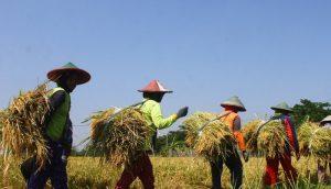produksi pertanian.