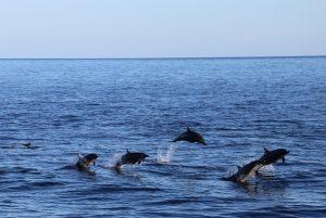 KKP Kelola Mamalia Laut Berkelanjutan di TNP Laut Sawu